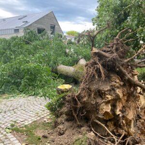 srušeno drvo