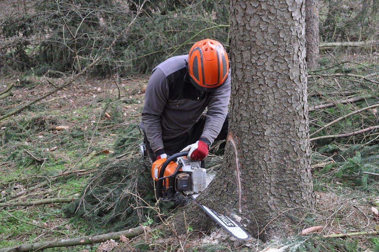 Kuče nesreća šuma